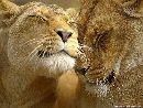 К чему может привести безусловная любовь?
